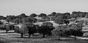 Torrequebrada Gourmet directo del campo de Extremadura a tu mesa B/N